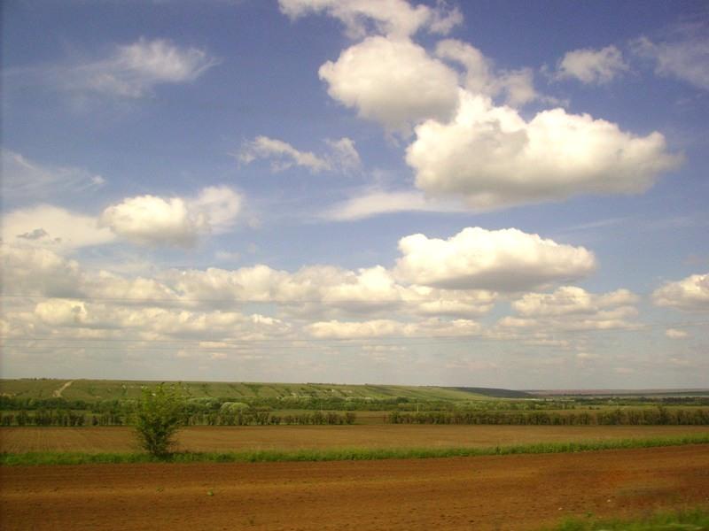 лечебная природа поля